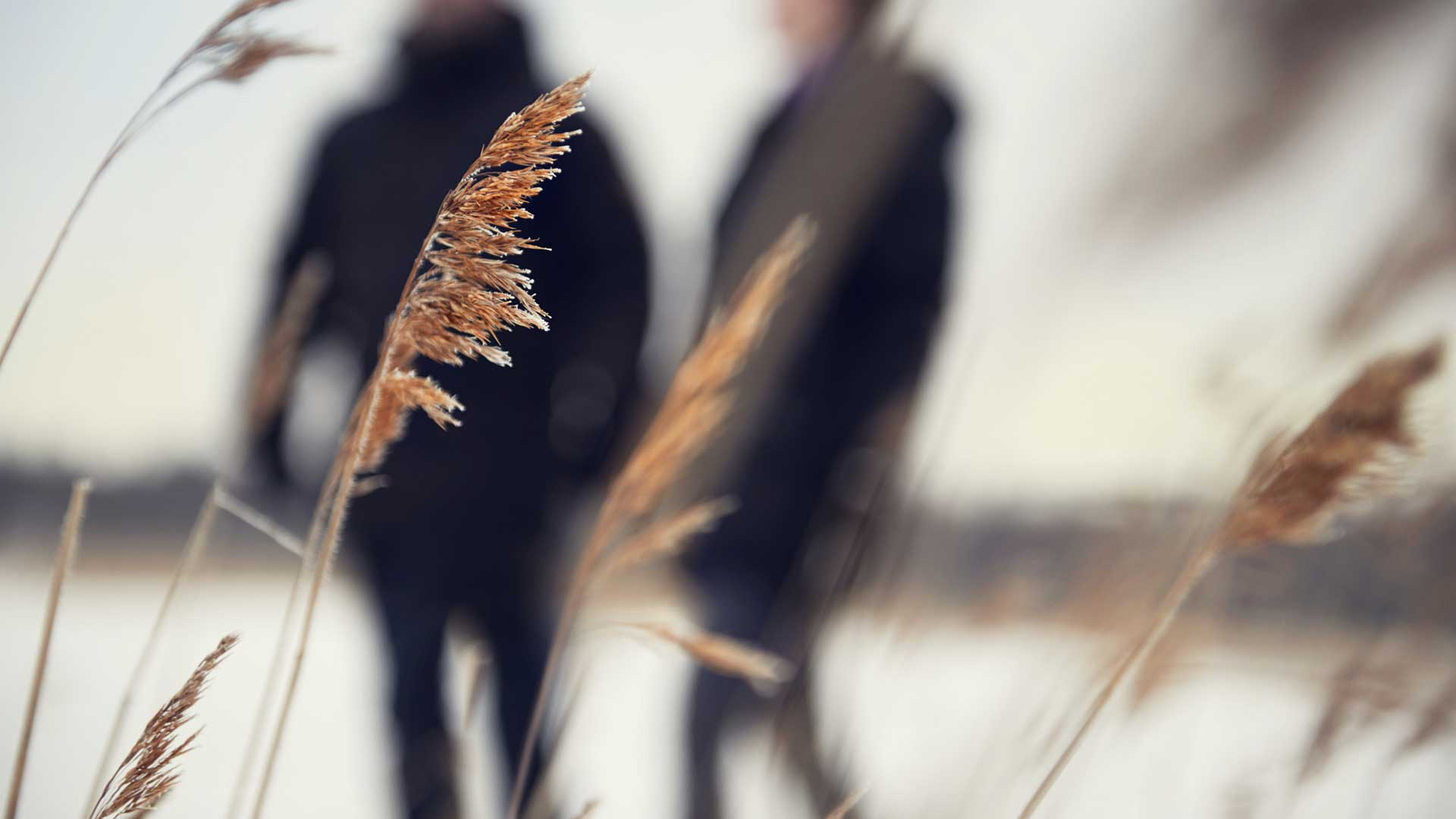 Close-up of frosty reeds close to a frozen lake with two people dressed in black in the background.